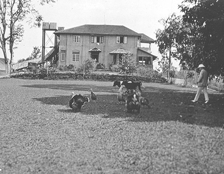 Listing of the Blackett, Wilson & Scott Family Planting History in Ceylon