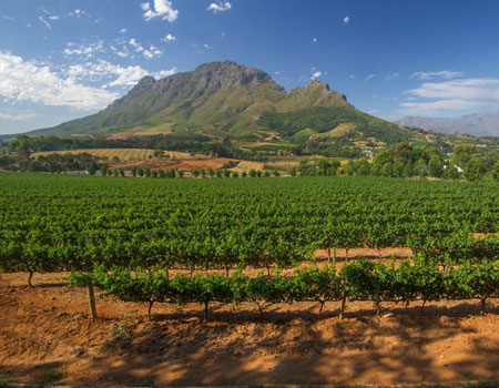 Nestled in the heart of South African wine country, Stellenbosch is full of sprawling vineyards, tasting rooms, and photogenic estates.