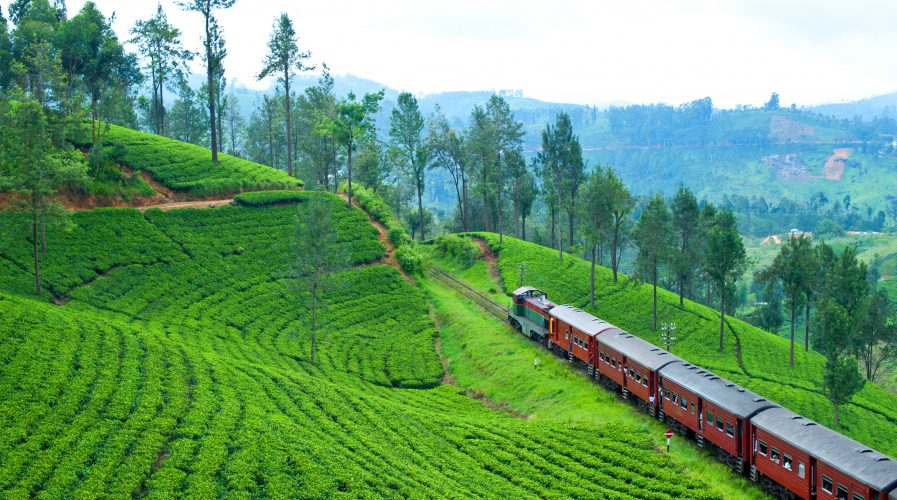 Train in a tea field