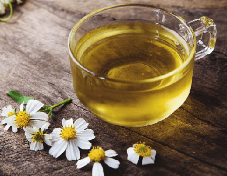 Camomile has been popularly referred to as the sleep time tea.