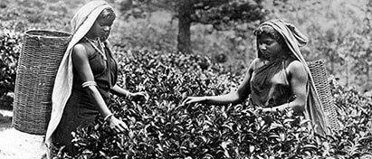 History of Plantations