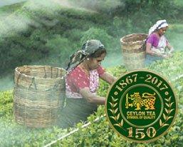 150 Years of Ceylon Tea