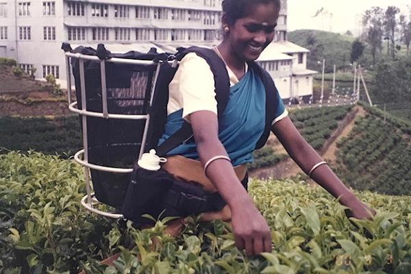 Maithri Liyanage - Chronicle of a Sri Lankan Planter