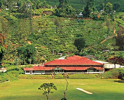Discover the History of ceylon Tea - The Darrawella Club